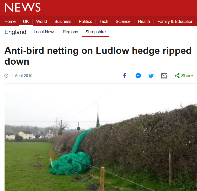 anti bird netting in Ludlow story BBC news