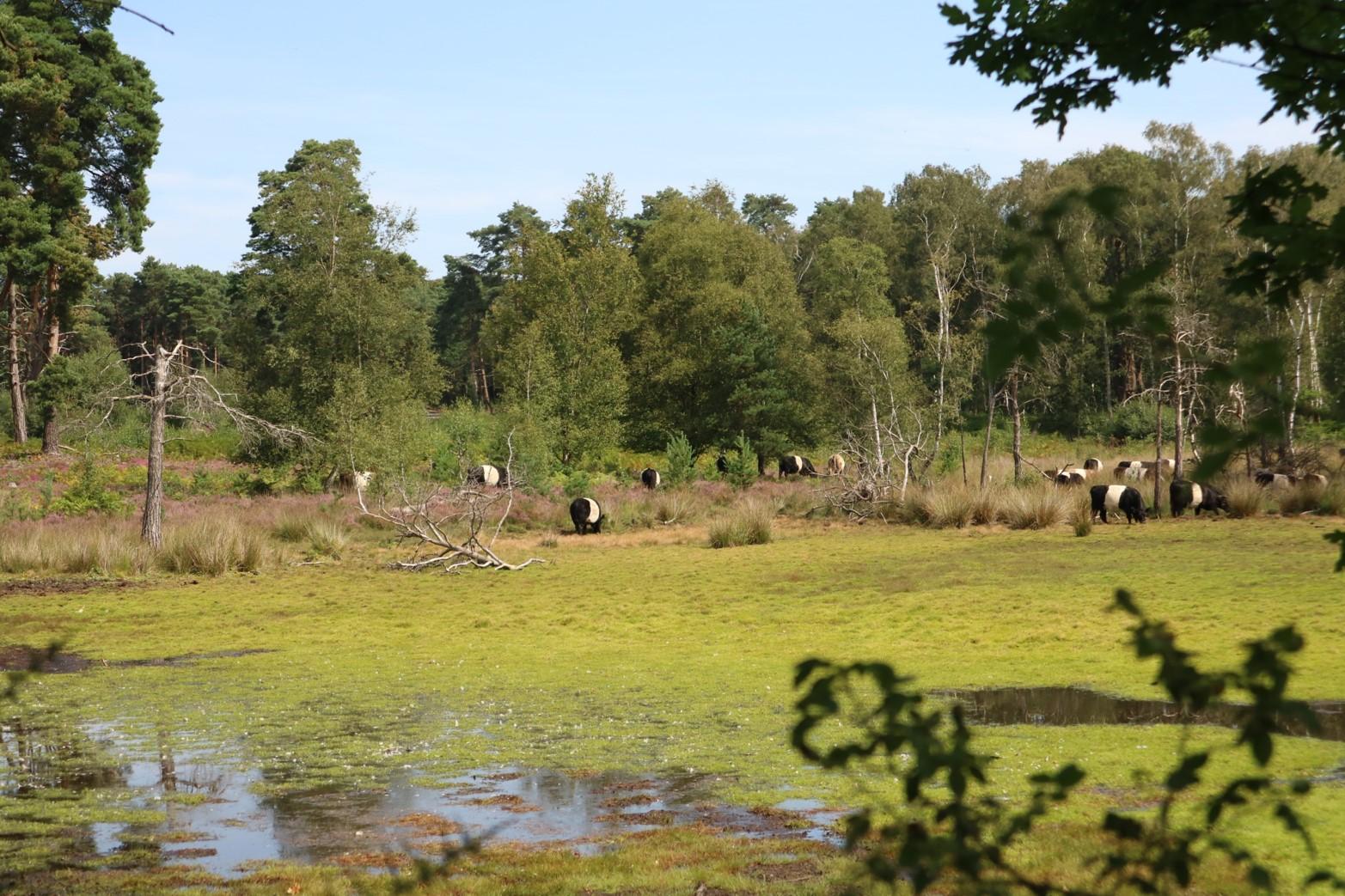 wisley common