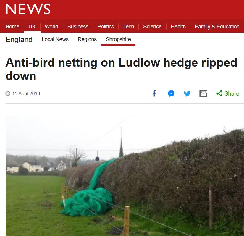 anti bird netting in Ludlow story BBC news